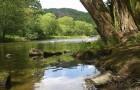 Řeka Jihlava 2